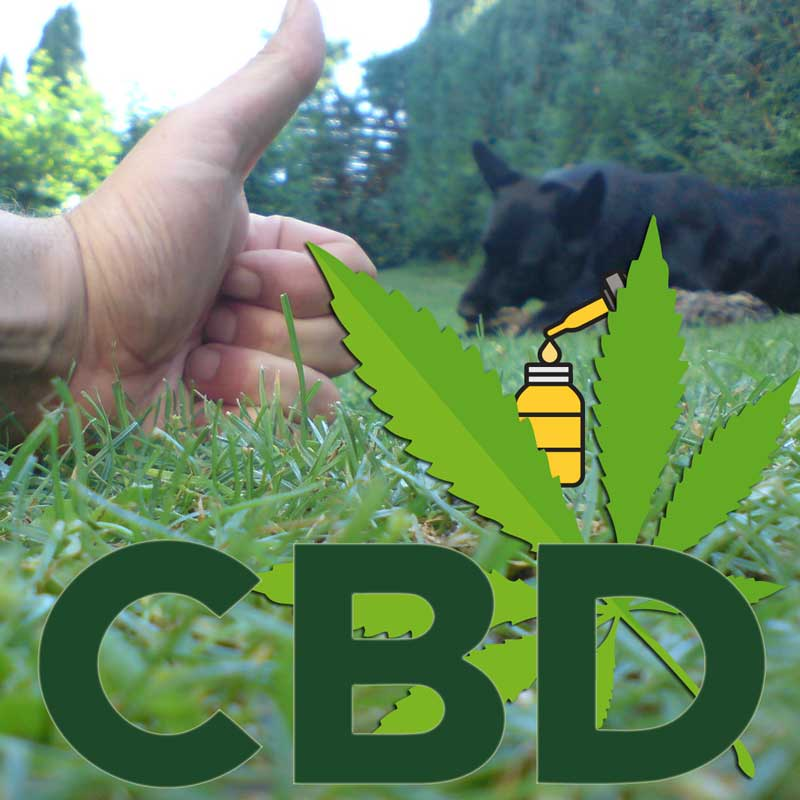 Huile de CBD pour chiens de traindee avec cannabidiol comme alimentation complémentaire pour les animaux souffrant de stress, de tension et de nervosité. Sans THC, cannabis de chanvre.