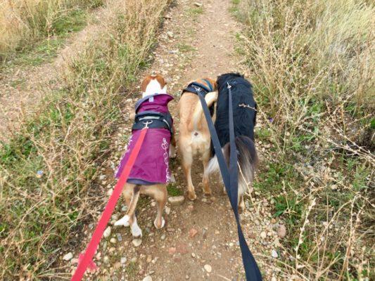 traindee® mehrere Hunde an Hundeleinen Ruckdämpfer für entspannte Spaziergänge mit Hunden die an der Leine ziehen