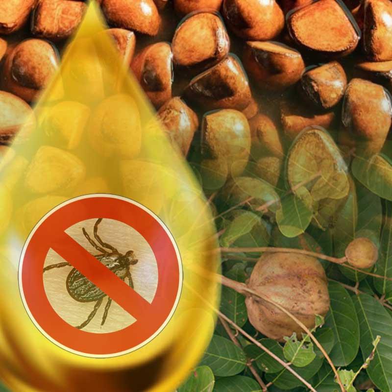 Reines, natürliches Andiroba Öl gegen Zecken. Natürlicher Zeckenschutz für Hunde ohne Chemie. Floh, Moskito und Zecken Abwehr aus der Natur von traindee