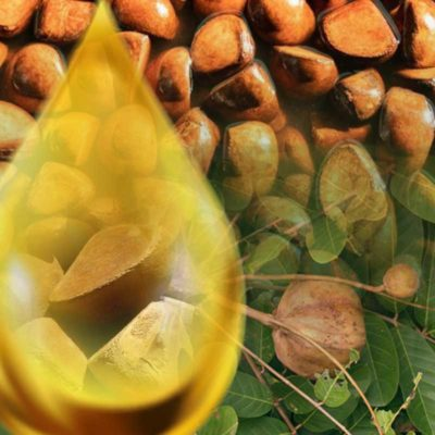 Reines Andiroba Öl als Behandlung gegen Cellulite. Pures, natürliches Öl aus den Nüssen der Andiroba Frucht als cellulitis Behandlung für Gesundheit und Medizin von traindee.