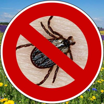 natural tick repellent for dogs without chemicals when insects in the meadow are dangerous with margosa and geraniol extract by traindee