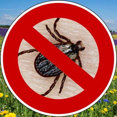 natürliches zeckenmittel ohne chemie für hunde wenn insekten auf der wiese in der natur gefährlich werden mit margosa und geraniol extrakt von traindee