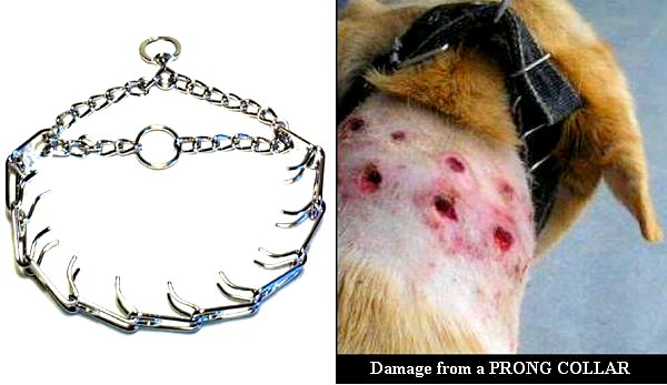 traindee® painful prong and stroke collars are forbidden and use aversive dog training techniques hurting your dog